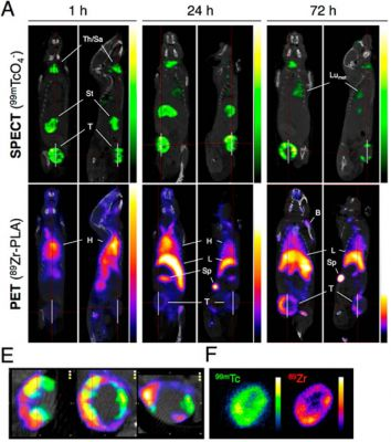 Multimodal imaging study with 89Zr-PLA in the 3E.Δ.NT/NSG mouse model of metastatic breast cancer