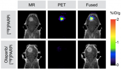 Non-invasive PET/MRI Imaging of PARP1 Expression in Glioblastoma Models with nanoScan PET/MRI (1T)